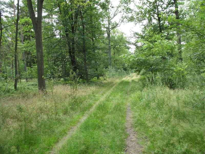 Dual Track - zweispuriger Weg