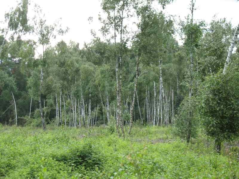 Im Wald bei Steinhorst