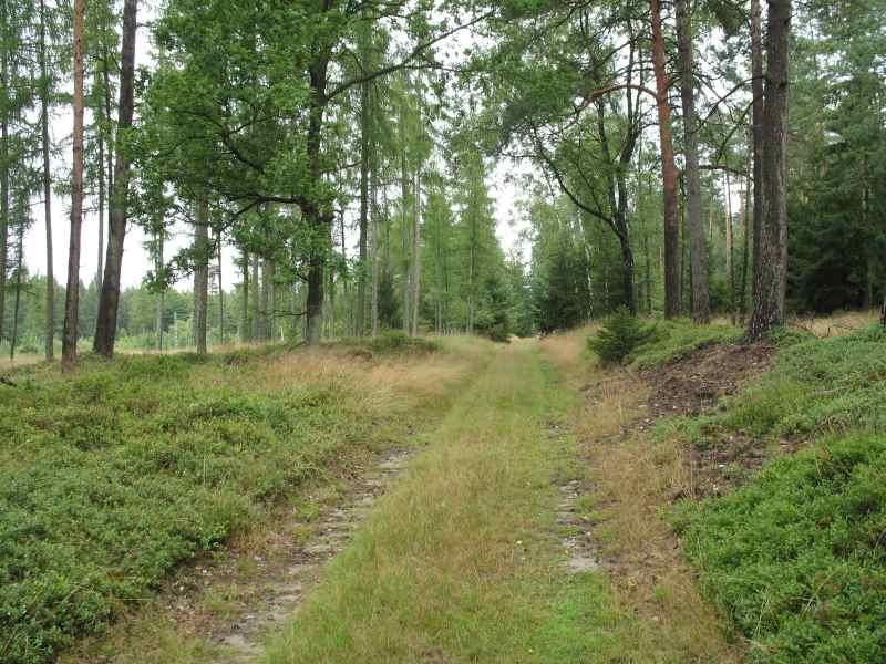 Im Wald bei Eschede