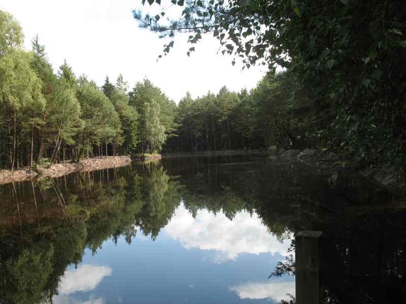 Künstlich angelegter See im Wald bei Atensalzkoth