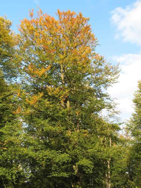 Ansonsten wird es langsam Herbst: