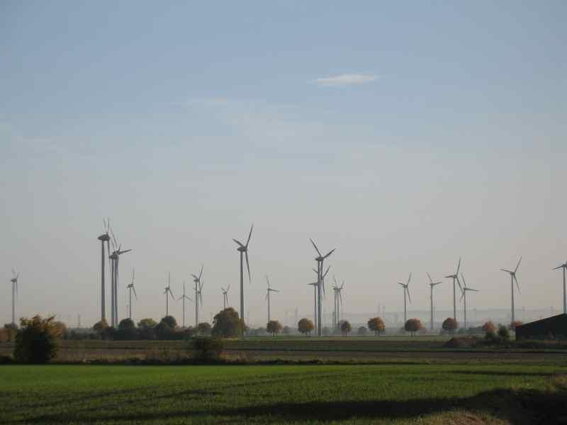 Windmühlenwald