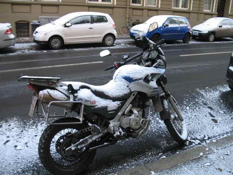 Kälbchen im Schnee