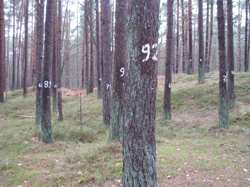 Wald von Graf Zahl