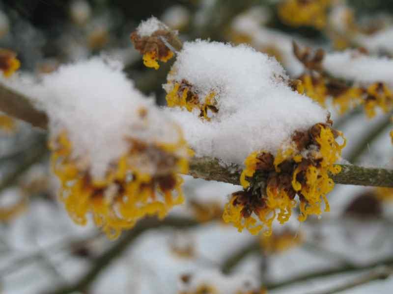 Florale Reste: