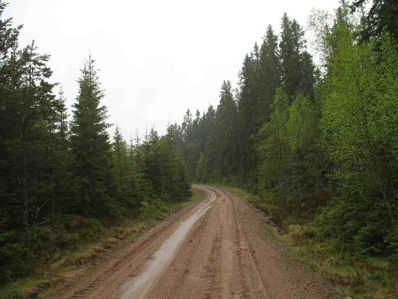 schwedische Waldwege