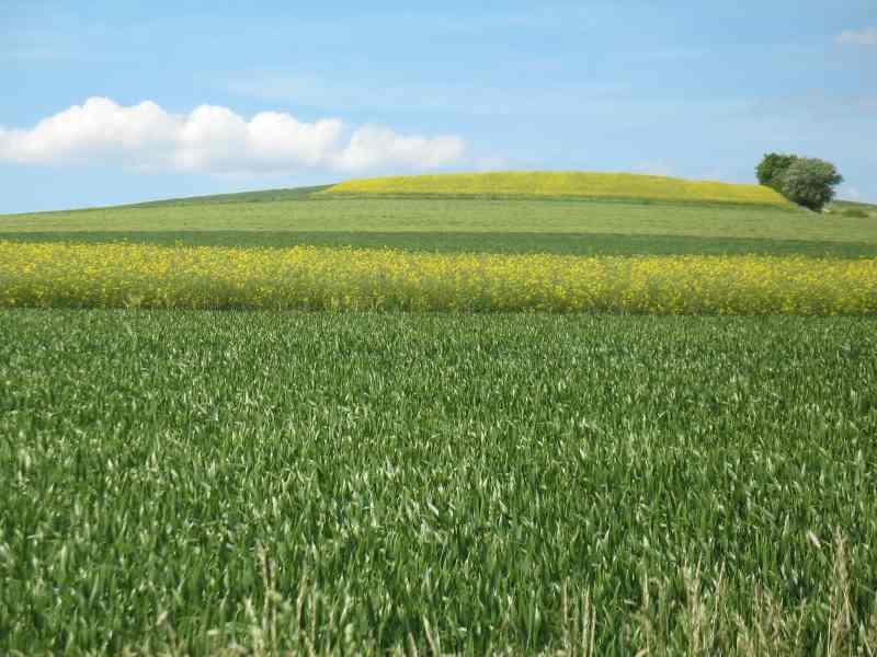 saftige Felder