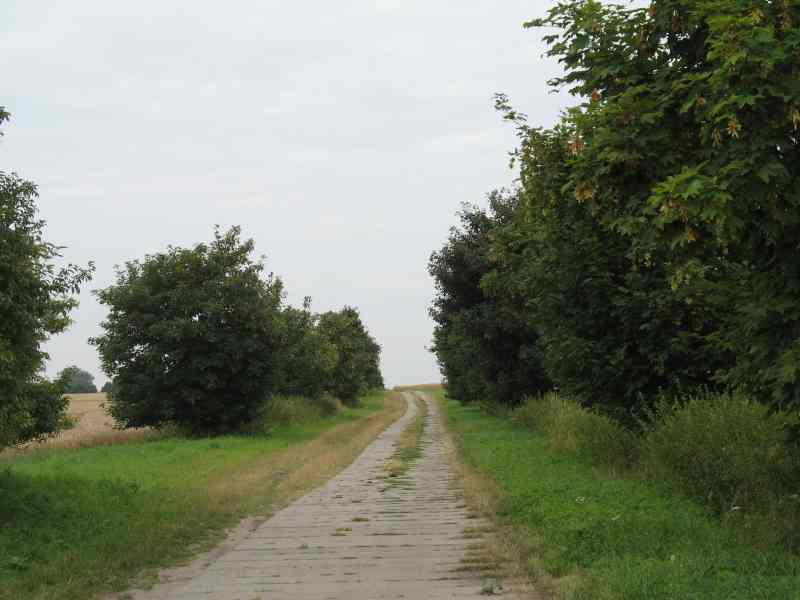 Betonplattenweg