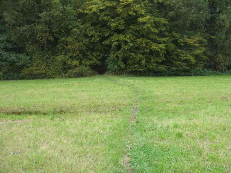 Singletrack in den Wald