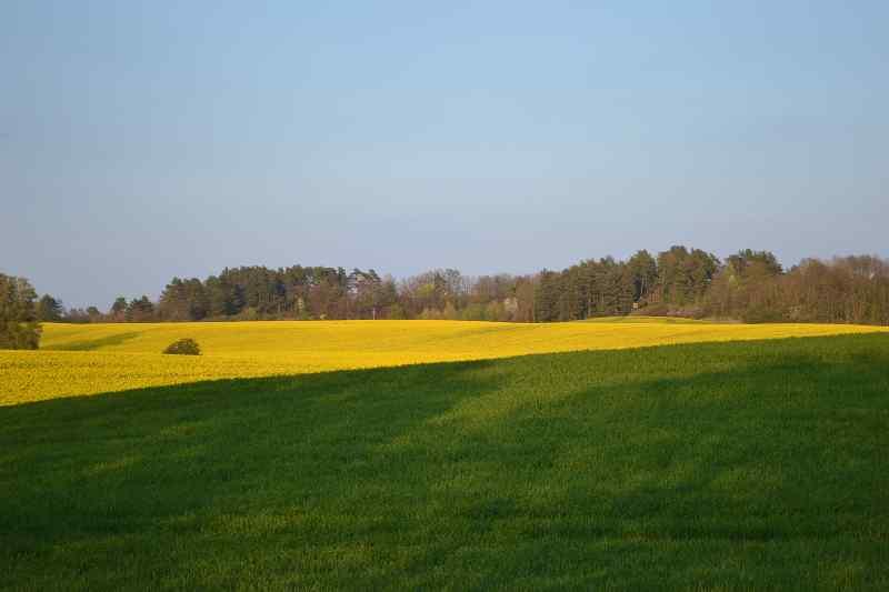 gelb-grüne Felder