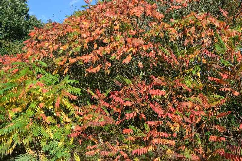 Herbstalub