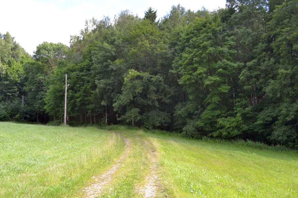durch den Wald durch und dann links