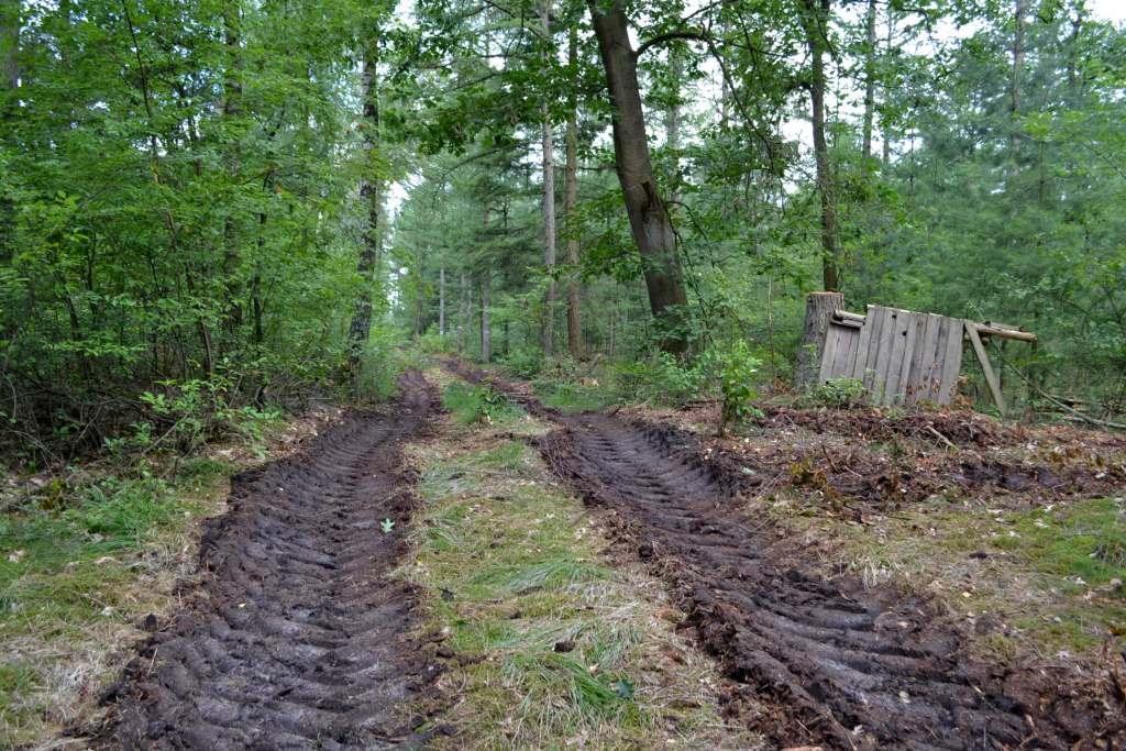 welch guten Einfluß die Hozwirtschaft auf den Waldboden hat