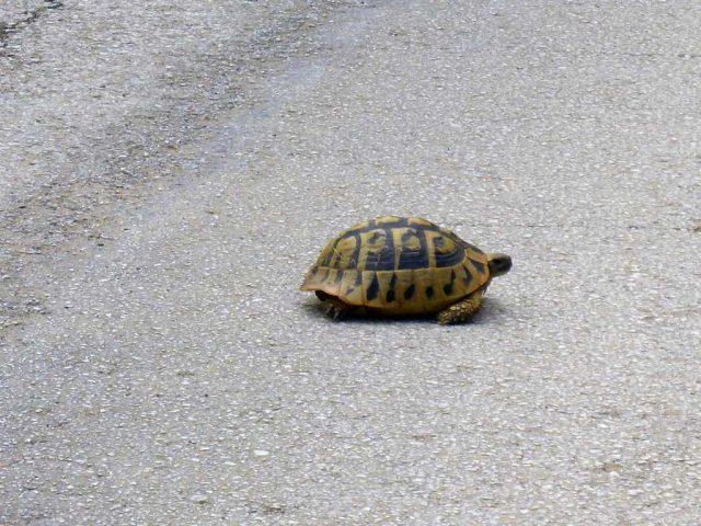 langsamere Verkehrsteilnehmer