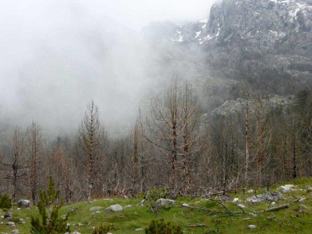 Le Waldsterben