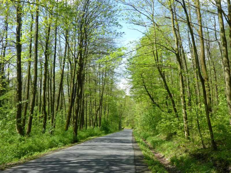 Buchenwälder