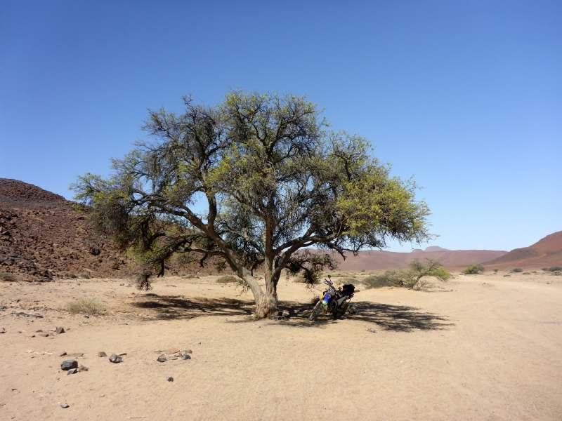 Baum im Krater