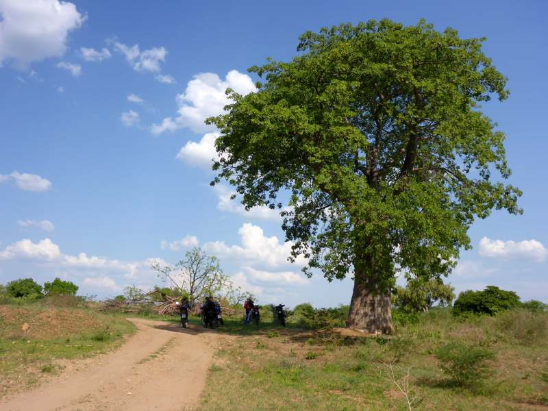 Pause unterm Baobab