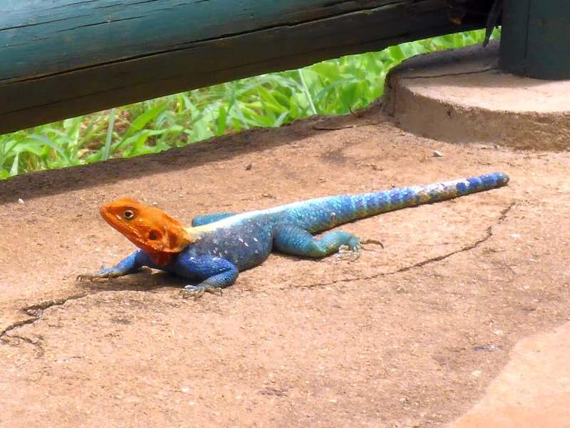 Gecko (?)