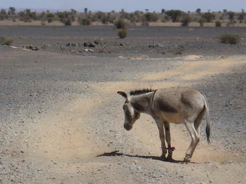 geparkter Esel