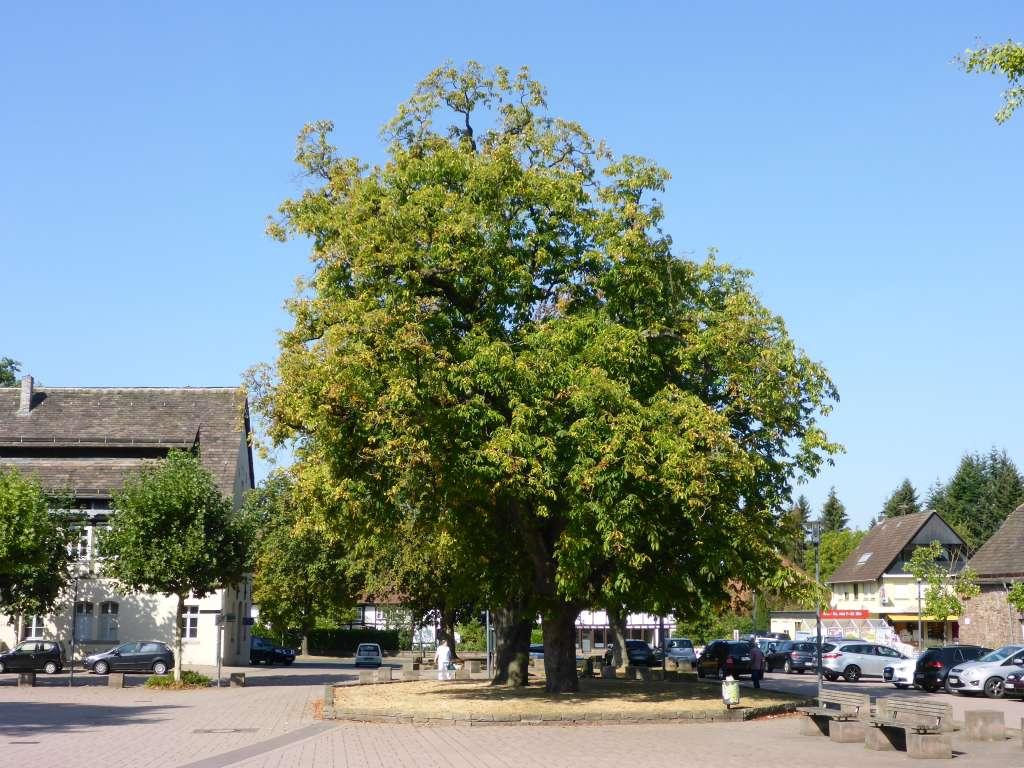Schloßplatz in Bevern