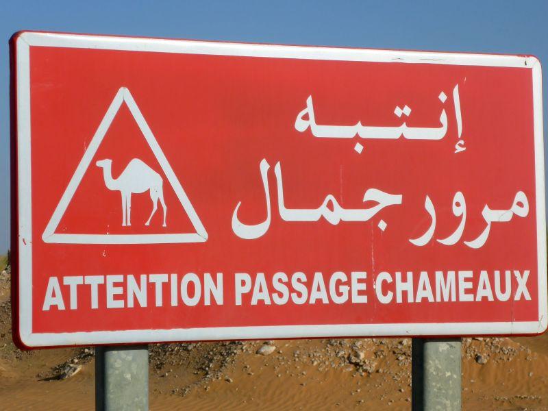 Achtung, Kamelwechsel!