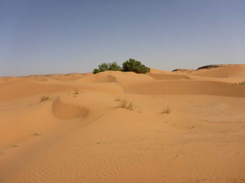 Sandfeld